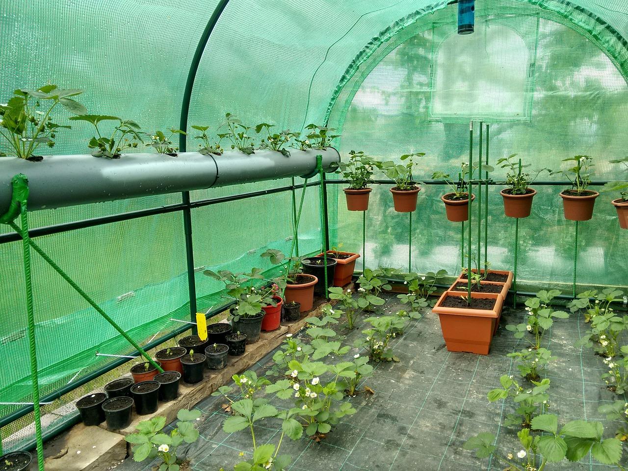 greenhouse-748994_1280